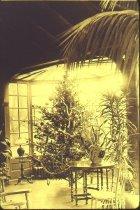 Image of Compton Christmas Tree  Circa 1925 - 2012.4.1