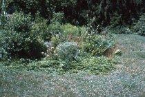 Image of Bog Garden  1966 - 2013.1.107