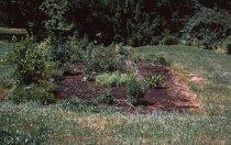 Image of Bog Garden  1964 - 2013.1.108