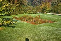 Image of Bog Garden  1963 - 2013.1.109