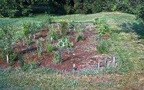 Image of Bog Garden  1962 - 2013.1.110