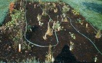 Image of Bog Garden  1961 - 2013.1.111