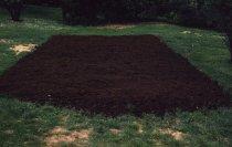 Image of Bog Garden  1959 - 2013.1.118