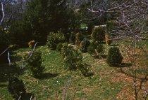 Image of Boxwood planting  1961 - 2013.1.123