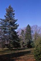Image of Coniferetum  1964 - 2013.1.130
