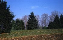 Image of Pinetum  1960 - 2013.1.134