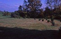 Image of Coniferetum  1964 - 2013.1.147