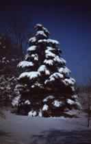 Image of Winter Scene - 2013.1.17