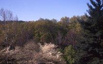 Image of Trees Below Gates Building  1963 - 2013.1.179