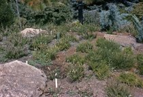 Image of Heath Garden  1965 - 2013.1.248