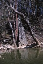 Image of Map -- Quartzite Outcrop Along the Wissahickon, Morris Arboretum  1964 - 2013.1.261