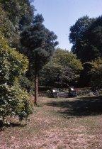 Image of Sequoiadendron and Orange Balustrade at Morris Arboretum  1966 - 2013.1.270