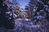 Image of Winter Scene at the Arboretum - 2013.1.28