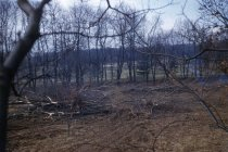 Image of Forestry Nursery after Bulldozing  1955 - 2013.1.303