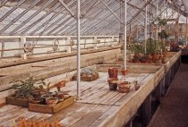 Image of Main greenhouse  Winter-Spring 1960-61 - 2013.1.308