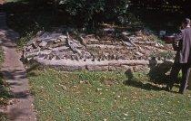 Image of Phlox Garden  1963 - 2013.1.343
