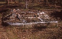 Image of Phlox Garden  1962 - 2013.1.351