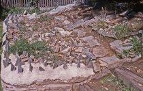 Image of Phlox Rock Garden  1963 - 2013.1.357