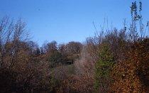 Image of Arboretum Views  1959. - 2013.1.38