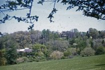Image of Arboretum Views Across the Azalea Meadow and South Slope  1955 - 2013.1.39