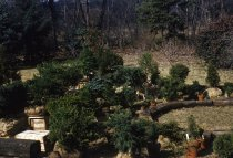 Image of Conifer Exhibit   1959 - 2013.1.4