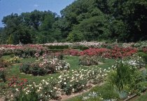 Image of Rose Garden 1959 - 2013.1.410