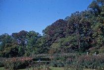 Image of View Across Rose Garden 1955 - 2013.1.412