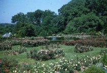 Image of Rose Garden  1956 Rose Garden 1956  - 2013.1.418