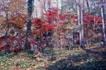 Image of Acer palmatum et al, South Slope 1963 - 2013.1.432
