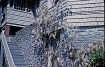 Image of Wisteria floribunda alba, Gates Hall 1959 - 2013.1.441