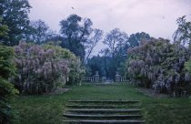 Image of Wisteria Walk looking toward Rose Garden, 1965 - 2013.1.447