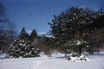 Image of Winter Scene at the Arboretum  1956 - 2013.1.47