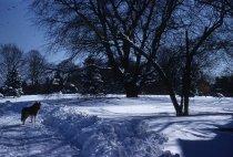 Image of Snowy Path Looking Toward Gates Hall 1956 - 2013.1.5