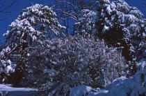 Image of Winter Scene at the Arboretum  1965 - 2013.1.55