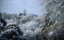 Image of Winter Scene - 2013.1.56
