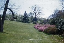 Image of Azalea Planting Along Stream  1956 - 2013.1.75