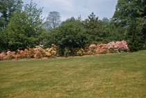 Image of Azalea Planting  1956 - 2013.1.79