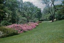 Image of Azalea Planting  1955 - 2013.1.82