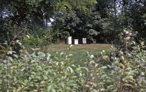 Image of Bee Garden 1963 - 2013.1.96