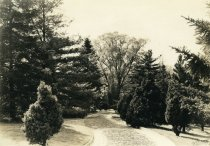 Image of Trees along Drive near Lodge / Tonkin Way  1937 - 2004.1.640