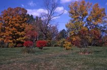 Image of Fall color on Bloomfield Farm1966 - 2013.1.572