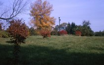 Image of Fall color area on Bloomfield Farm  1965 - 2013.1.573