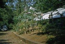 Image of Medicinal Garden  1956 - 2013.1.582