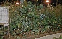 Image of Medicinal Garden at Philadelphia Flower Show  1958 - 2013.1.586