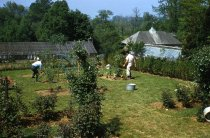 Image of Medicinal Garden Preparation  1958 - 2013.1.587