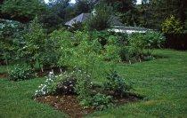 Image of Medicinal garden  1959 - 2013.1.590
