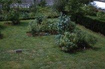 Image of Medicinal garden  1959 - 2013.1.592