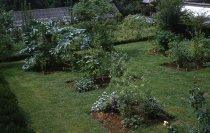 Image of Medicinal Garden  1959 - 2013.1.593