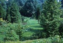 Image of Medicinal garden  1960 - 2013.1.598