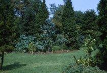 Image of Medicinal garden  1960 - 2013.1.599